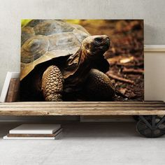 Tortoise Turtle Photographic Print on Canvas Big Box Art Size: H x W Painting Frames, Painting Prints, Tortoise Drawing, Turtle Swimming, Tortoise Turtle, Canvas Art, Canvas Prints, Leonid Afremov Paintings, Box Art