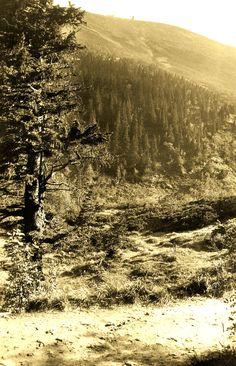 Riesengebirge Melzergrund Poster, Country Roads, Environment, Postcards, Billboard