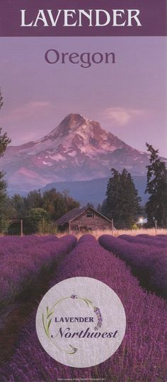 Lavender season begins as early as May, the most beautiful times being in June & July. Check out our calendar of events for opportunities to see the farms during a festival or special event. Event Calendar, North West, Special Events, Oregon, Most Beautiful, Lavender, Seasons, Travel, Viajes