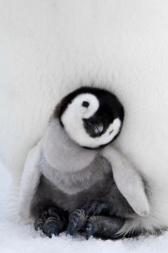Aquariums & Tanks Temperate Teddy Tank Betta Fish Bowl Penguin/dog/monkey/unicorn Aquarium As Seen On Tv