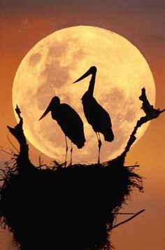 Moon and bird silhouettes