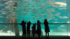 Things to do in New Orleans - Audubon Aquarium