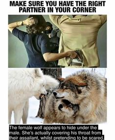 Animal Memes, Funny Animals, Cute Animals, Funny Relatable Memes, Funny Jokes, Hilarious, Psychology Fun Facts, She Wolf, Cute Stories