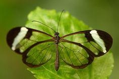 Macro Photography Photo Tips Public Domain Wings Butterflies Photography Tips Butterfly Papillons Caterpillar