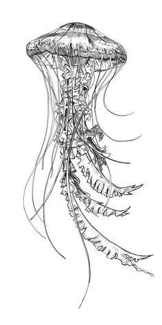 vintage jellyfish illustration - Google Search