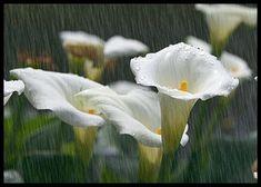 Szép csokor.),Az a sárga rózsa.),Szivárványszínű rózsa.,Szép rózsaák.),Esik de meddig.),Vegyes csokor.),Gyönyörü szép.),Mese szép.),Mese szép rózsák.),Sziv alaku virágok.), - sarkantyu Blogja - A boldogság,A hét napjai,A mosoly,Advent,Állatok vegyesen,Angyalok-tündérek,Animációs képek,Anyák napjára,Barátság,Biblia,Csendéletek,Dalszövegek,Donnán kapott képek,Édesanyámnak.),Édesapám emlékére.),Farsangi képeslapok,Festmények,Gyerekek,Gyertyák,Gyümölcsök,Halloween képek,Halottak napja,Házi ...