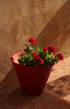 Old Town, Albuquerque Still Life