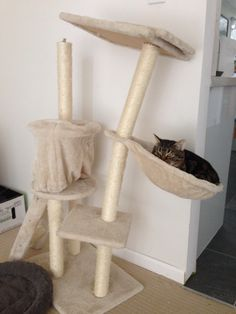 Kitty's too heavy for his kitty tower - Imgur