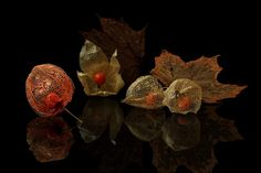 Photographers photo Шруб (Беляева) Татьяна - Осенние кружева