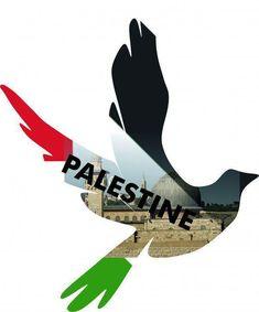 #FreePalestine #EndTheOccupation #FreeGaza