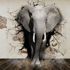 Old Brick Wall Elephant Wall Mural Wallpaper 104 – Jessartdecoration Elephant Wallpaper, Photo Wallpaper, Wall Wallpaper, Wallpaper Wallpapers, Nature Wallpaper, Cartoon Cartoon, Photo Clipart, Art Clipart, Clipart Images