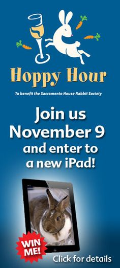 Nov 9th - join Sacramento House Rabbit Society for another fun Hoppy Hour @allearssac