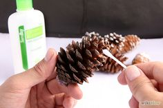 How to Preserve Pinecones: 8 Steps