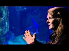 Shark extinction and its effect on ocean ecosystem - Gordon Ramsay