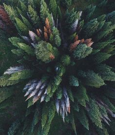 New Nature Photography Mountains America Ideas Camping Photography, Tree Photography, Aerial Photography, Landscape Photography, Summer Photography, Tumblr Travel, Nature Tattoo Sleeve, Destinations, Earth Spirit