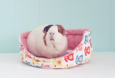 Guinea Pig Cuddle Cup with Absorbent Pad / Guinea Pig Bed / Fleece / Cozy / Size Large / Ultra Absorbent / Hello Operator