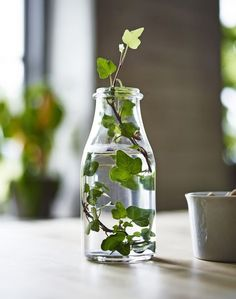 Office, business, gastronomy: inspirations- Büro, Geschäft, Gastronomie: Inspirationen ENSIDIG clear glass vase with a sprig of ivy in it - Deco Nature, Wedding Decorations, Table Decorations, Wedding Centerpieces, Decoration Party, Table Centerpieces, Wedding Table, Clear Glass Vases, Deco Floral