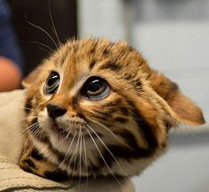 Aww... This is the most adorable kitten I've seen!