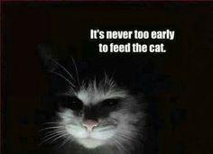Cat Thursday-- minions, collectin' them...