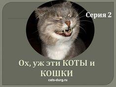 ПРИКОЛЫ - СМЕШНЫЕ КОТЫ И КОШКИ.ПОДБОРКА #2/Funny Cats Complation