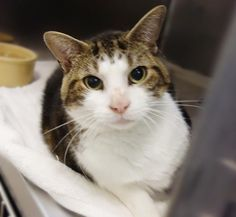 Geddy 36038478 is a 3 year old girl who is friendly & talkative. Check her out!