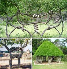 Искусство формирования деревьев (арбоскульптура) - оригинальный ладшафтный…