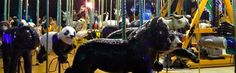 Dec. 27, 2016 | Visit the Zoo Day. #8 of 10 Best Zoo Lights: Zoolights at the Smithsonian National Zoo in DC. More than half a million eco-friendly LED lights provides an environmentally friendly lights display. Visitors can ride a solar-powered carousel!