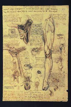 Leonardo da Vinci, Gamba