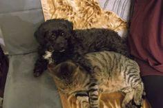 Benita & Tiger
