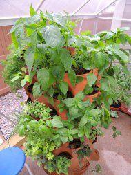 Garden tower in greenhouse