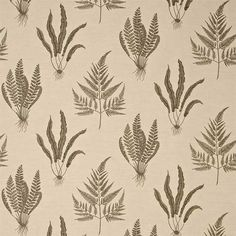 Sanderson A Painters Garden Woodland Ferns Fabric Collection and Wallpaper Fern Wallpaper, Feature Wallpaper, Fabric Wallpaper, Botanical Wallpaper, Botanical Drawings, Botanical Illustration, Gaston Y Daniela, Leaf Structure, Sanderson Fabric