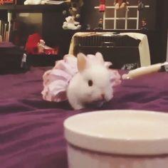 Cute little #bunny looking for food. #veedeo