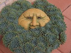 Garden head surrounded by hens and chicks by april
