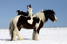 Horsephotos - Renáta Kolářová
