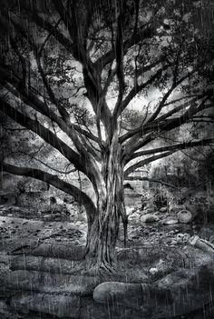 The teachings of a tree - TEOMONTANA