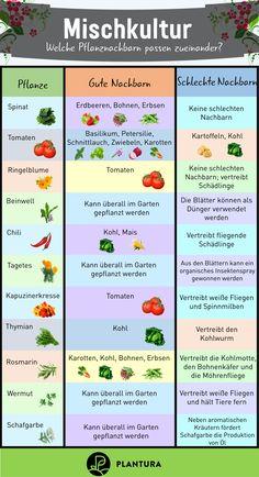 Garten ideen Plantura sustainable gardening for all mixed crops: Which plants go well together? Garden Care, Backyard Garden Design, Garden Landscaping, Permaculture, Succulents Garden, Garden Plants, Paint Your House, Plantar, Plantation