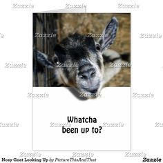 Greetings from a Cute and nosy goat popping his head out to see you! #Zazzle #Gravity9 -