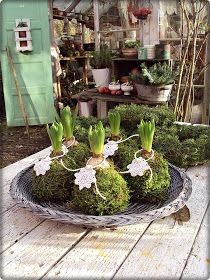 try this with one of the hyacinth bulbs I'll force into bloom in January Christmas Flowers, Christmas Diy, Christmas Decorations, Christmas Inspiration, Garden Inspiration, Moss Garden, Deco Floral, Floral Foam, Spring Bulbs