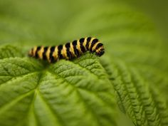 Fighting Pests in the Garden -- With Items From Your Kitchen - iVillage