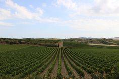 https://flic.kr/p/u4kwaS | IMG_2403 I © Amy Carlisle Photography I Sicily vineyards.