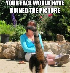 Your Face Would Have Ruined The Picture funny memes cat cats meme lol funny quotes humor funny pictures funny animals funny cats