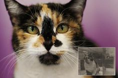 """It is really important to use color photography so potential adopters don't miss important features. Kisses here has a beautiful calico coat, but you would never know from the """"before"""" picture."""