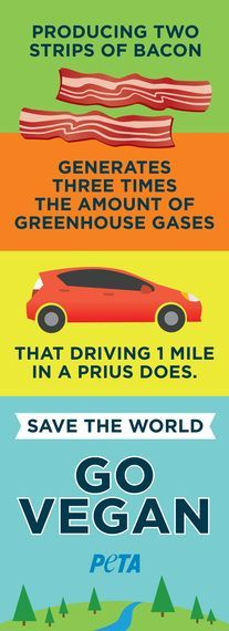 Cars Aren't Enough -- Try Vegan for Earth Day A reminder to our LA & Phoenix friends while they're at the electric car charging staion!A reminder to our LA & Phoenix friends while they're at the electric car charging staion! Vegan Facts, Vegan Memes, Vegan Quotes, Why Vegan, Vegan Vegetarian, Reasons To Be Vegan, Vegan Animals, Greenhouse Gases, Earth Day