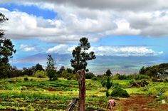 Farm With the Best View in the World, O'o Farm Maui Hawaii