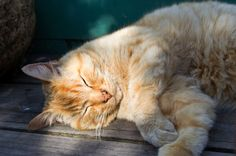 Senior Cat Care-Caring For An Old Cat [Very good article]