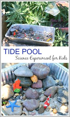 Tide Pool Science Experiment for Kids Tide Pool Science Experiment for Kids: Fun ocean activity for kids- turn it into a fun ocean themed sensory bin when you're done! (Next Generation Science Standard Kindergarten: NGSS ~ Science Activities For Kids, Preschool Activities, Day Camp Activities, Science Games, Science News, Indoor Activities, Reggio Emilia, Diy Pour Enfants, Science Experiments Kids