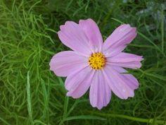 Pretty little flower!