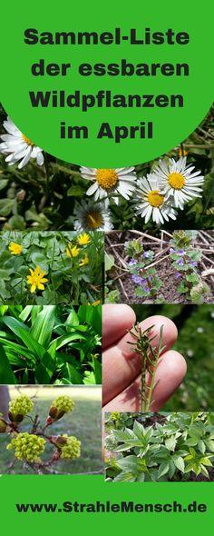 Collection list of edible wild plants April ray man- Sammelliste essbarer Wildpflanzen April Culture D'herbes, Short Plants, Edible Wild Plants, Jade Plants, Garden Types, Garden Care, Plantation, Edible Garden, Outdoor Plants