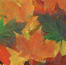 Toddler crafts with leaves