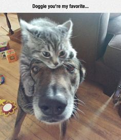 "* * DOG: "" I iz gonna haz to do somethin' about dis. Kitteh beez gettin' too possessive."""